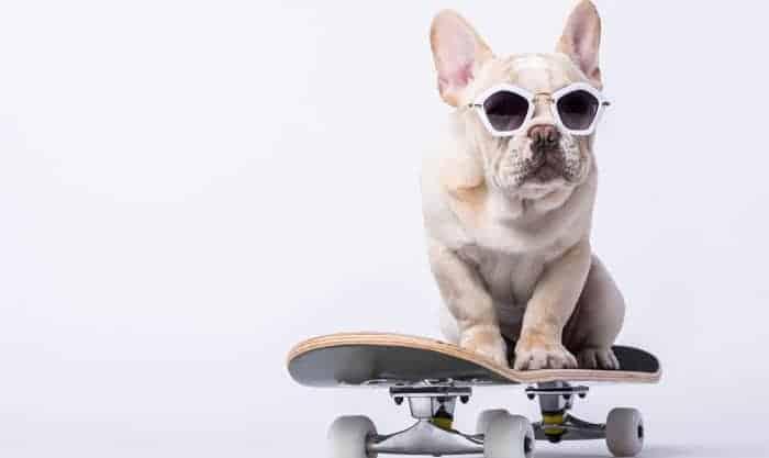 bulldog-skateboard